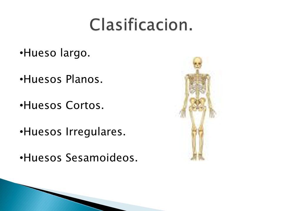 Hueso largo. Huesos Planos. Huesos Cortos. Huesos Irregulares. Huesos Sesamoideos.
