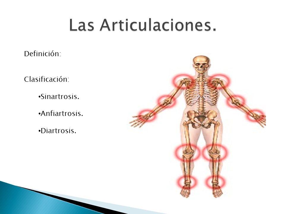 Definición: Clasificación: Sinartrosis. Anfiartrosis. Diartrosis.