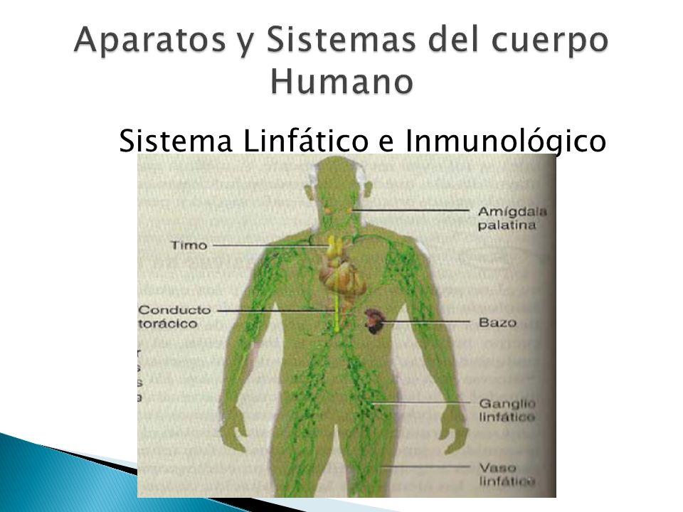 Sistema Linfático e Inmunológico