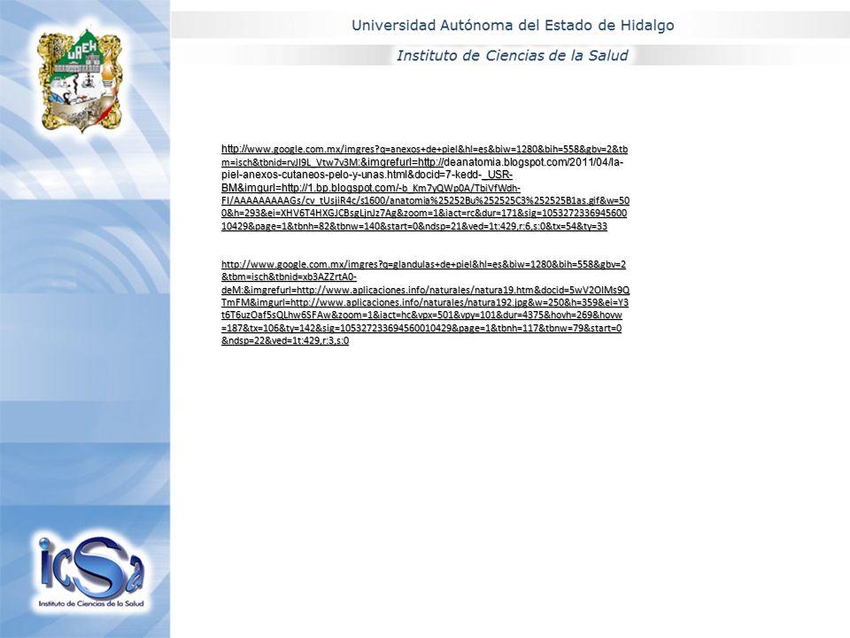 http:// www.google.com.mx/imgres?q=anexos+de+piel&hl=es&biw=1280&bih=558&gbv=2&tb m=isch&tbnid=rvJI9L_Vtw7v3M :&imgrefurl=http://deanatomia.blogspot.c