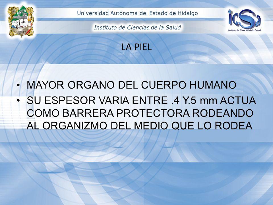 http:// www.google.com.mx/imgres?q=anexos+de+piel&hl=es&biw=1280&bih=558&gbv=2&tb m=isch&tbnid=rvJI9L_Vtw7v3M :&imgrefurl=http://deanatomia.blogspot.com/2011/04/la- piel-anexos-cutaneos-pelo-y-unas.html&docid=7-kedd-_USR- BM&imgurl=http://1.bp.blogspot.com/- b_Km7yQWp0A/TbiVfWdh- FI/AAAAAAAAAGs/cv_tUsjiR4c/s1600/anatomia%25252Bu%252525C3%252525B1as.gif&w=50 0&h=293&ei=XHV6T4HXGJCBsgLjnJz7Ag&zoom=1&iact=rc&dur=171&sig=1053272336945600 10429&page=1&tbnh=82&tbnw=140&start=0&ndsp=21&ved=1t:429,r:6,s:0&tx=54&ty=33 http://www.google.com.mx/imgres?q=glandulas+de+piel&hl=es&biw=1280&bih=558&gbv=2 &tbm=isch&tbnid=xb3AZZrtA0- deM:&imgrefurl=http://www.aplicaciones.info/naturales/natura19.htm&docid=5wV2OIMs9Q TmFM&imgurl=http://www.aplicaciones.info/naturales/natura192.jpg&w=250&h=359&ei=Y3 t6T6uzOaf5sQLhw6SFAw&zoom=1&iact=hc&vpx=501&vpy=101&dur=4375&hovh=269&hovw =187&tx=106&ty=142&sig=105327233694560010429&page=1&tbnh=117&tbnw=79&start=0 &ndsp=22&ved=1t:429,r:3,s:0