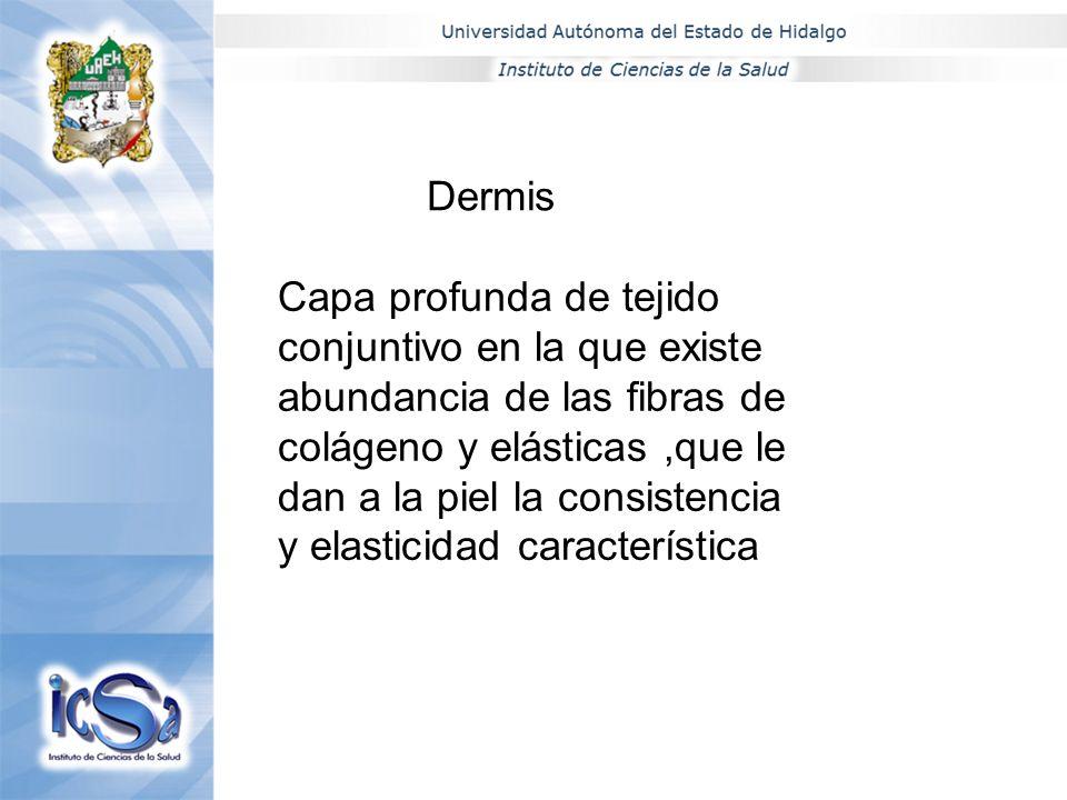 Apellido P., Apellido M, Nombre(s) Maximo Grado de EstudiosEn su caso NA (no aplica) Nombre del investigadorGrado Linea de InvestigaciónNivel S.N.I.DES Área Académicae-mailExtensión MCE CECILIA SANCHEZ MORENO MAESTRA EN CIENCIAS DE ENFERMERIAICSaENFERMERIA csm40@latinmail.l.com 51o1 MARIA RYTH CERVANTES YAUTENZIMAESTRA EN CIENCIAS DE ENFERMERIAICSaENFERMERIA5101