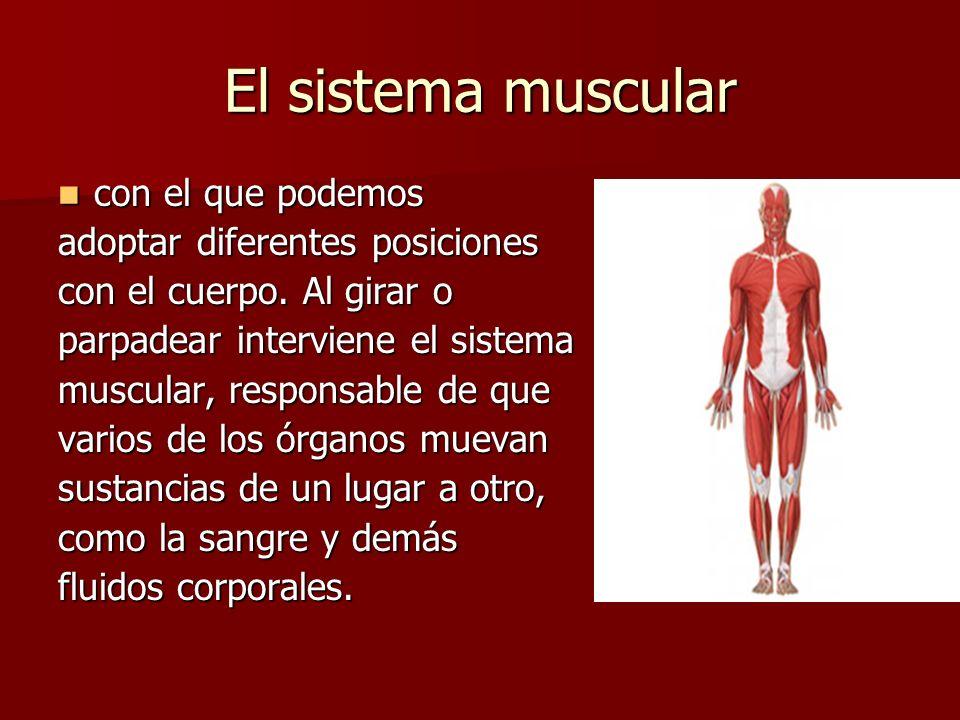 El movimiento en el Cuerpo Humano El cuerpo humano está hecho para ...