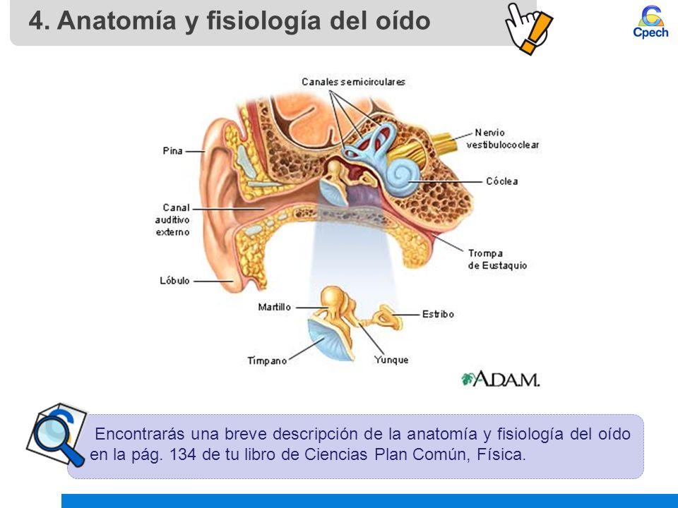 Encantador Anatomía Y Fisiología De Audio Componente - Anatomía de ...