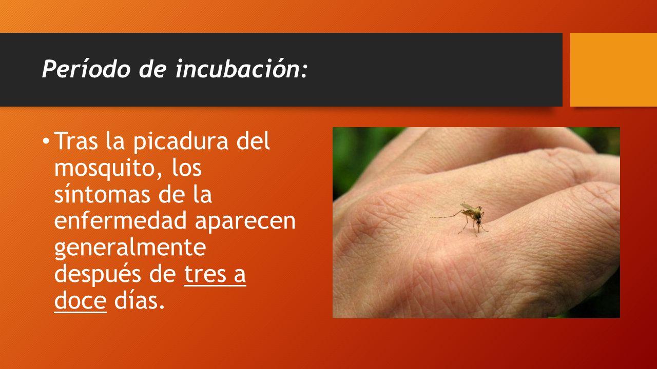 Período de incubación: Tras la picadura del mosquito, los síntomas de la enfermedad aparecen generalmente después de tres a doce días.