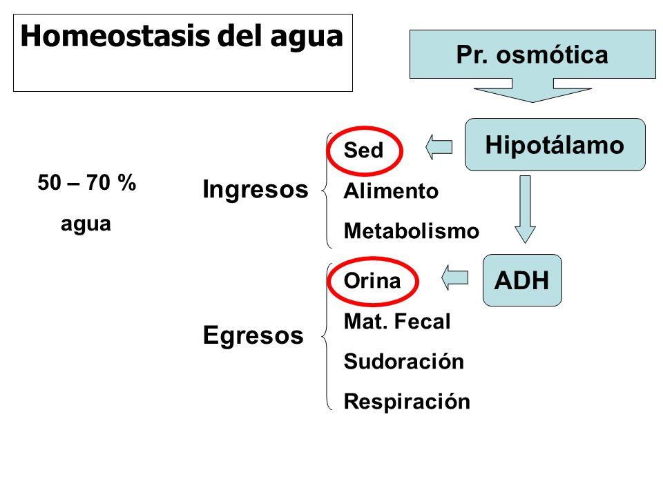 Homeostasis del agua Ingresos Egresos Sed Alimento Metabolismo Orina Mat.