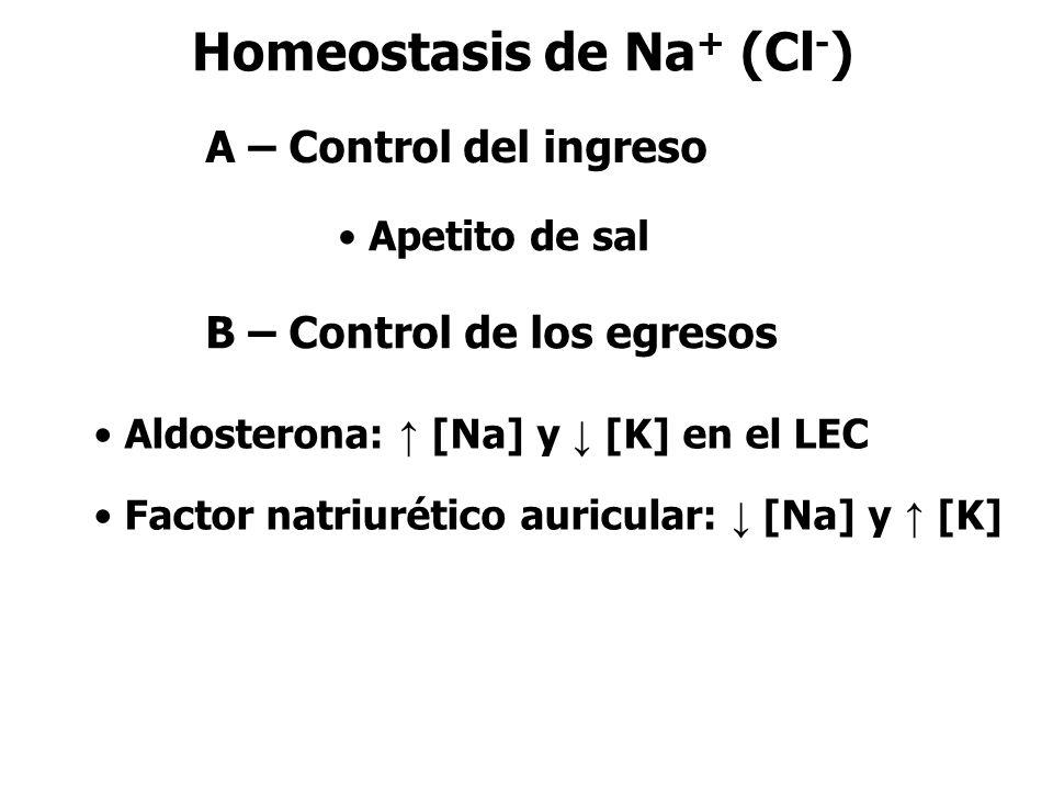 Homeostasis de Na + (Cl - ) Aldosterona: ↑ [Na] y ↓ [K] en el LEC Factor natriurético auricular: ↓ [Na] y ↑ [K] A – Control del ingreso Apetito de sal B – Control de los egresos