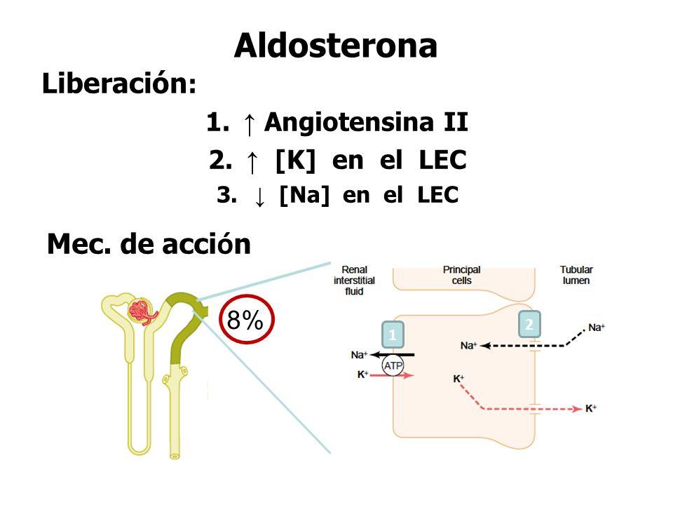 Aldosterona Liberación : 1.↑ Angiotensina II 2. ↑ [K] en el LEC 3.