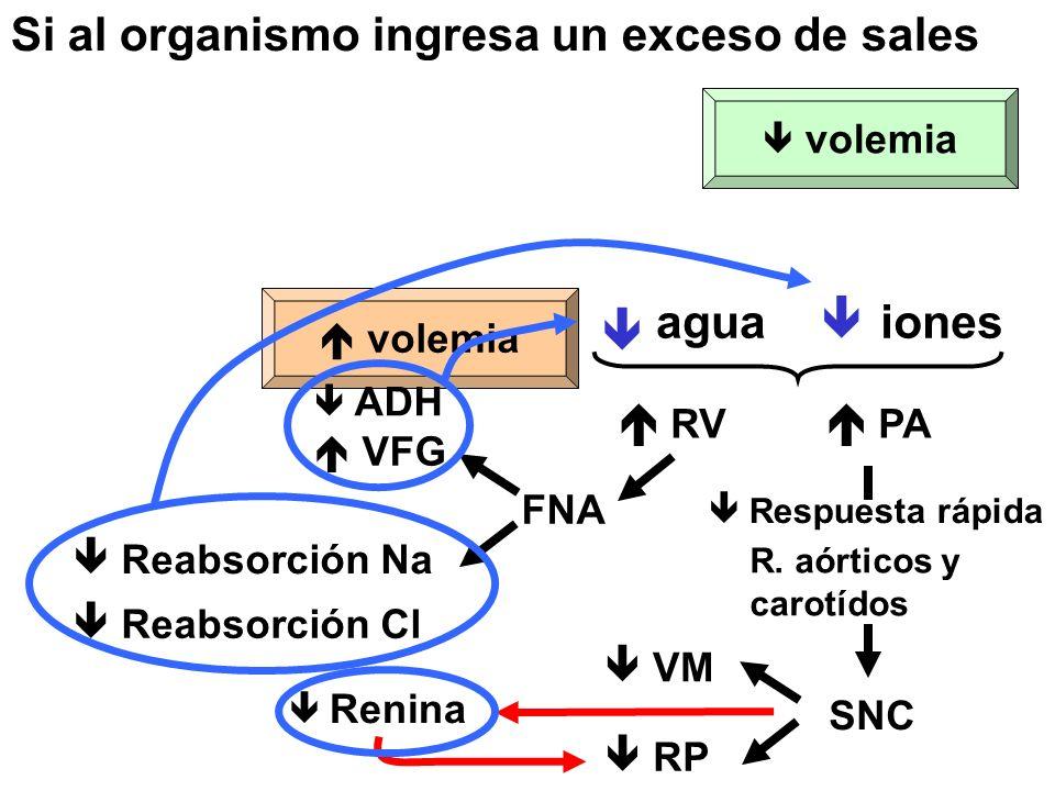Si al organismo ingresa un exceso de sales SNC  Respuesta rápida R.
