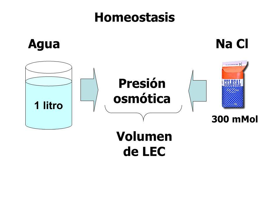 Homeostasis Presión osmótica Volumen de LEC Agua 1 litro Na Cl 300 mMol