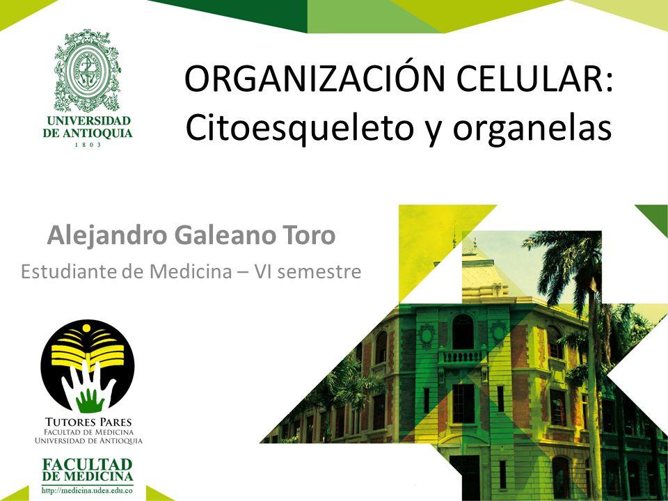 ORGANIZACIÓN CELULAR: Citoesqueleto y organelas Alejandro Galeano Toro Estudiante de Medicina – VI semestre