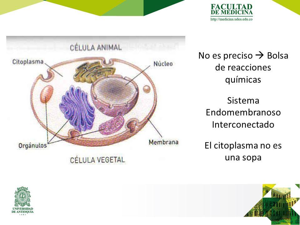 No es preciso  Bolsa de reacciones químicas Sistema Endomembranoso Interconectado El citoplasma no es una sopa