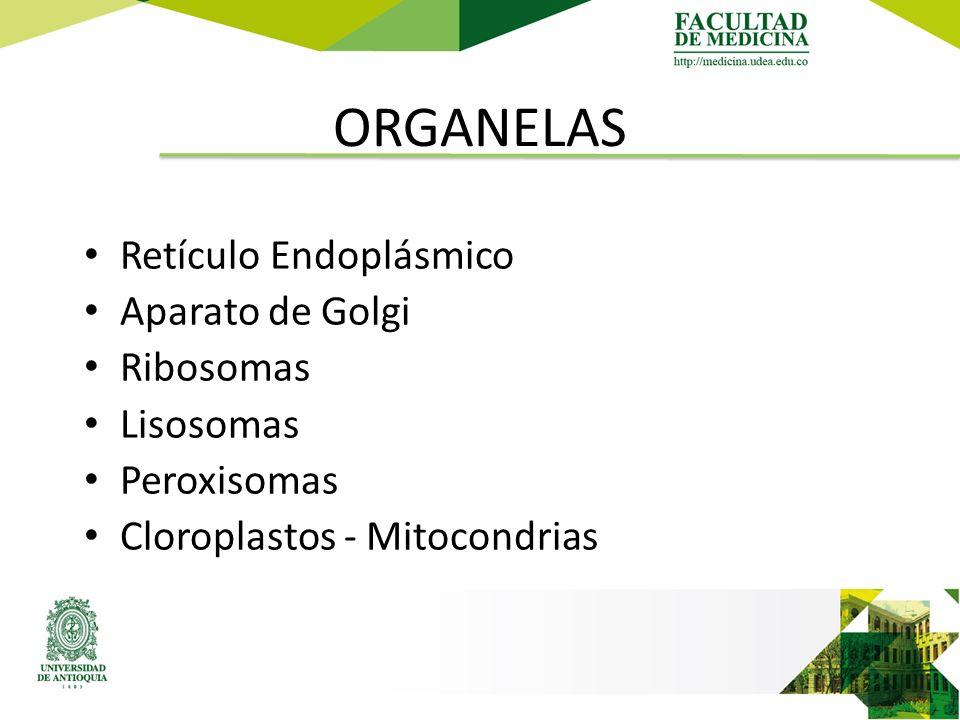 ORGANELAS Retículo Endoplásmico Aparato de Golgi Ribosomas Lisosomas Peroxisomas Cloroplastos - Mitocondrias
