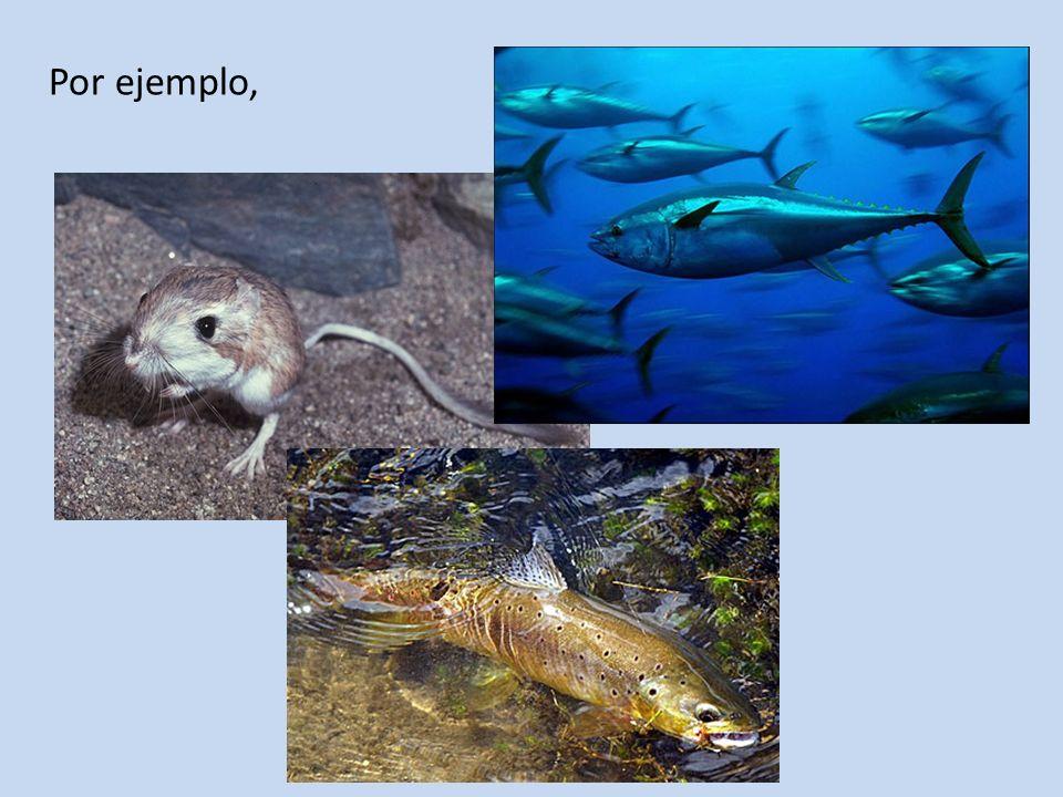 Tienen riñones que les permiten conservar agua produciendo desechos semisólidos