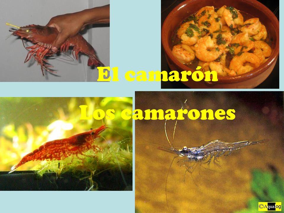 El camarón Los camarones