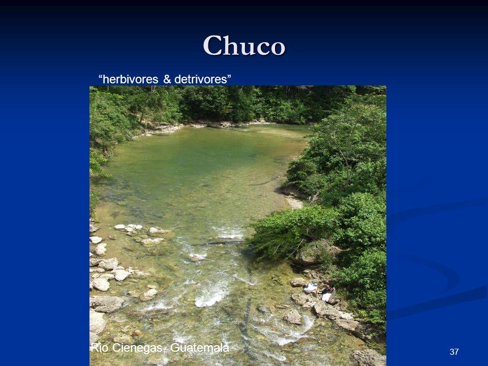37 Chuco Rio Cienegas, Guatemala herbivores & detrivores