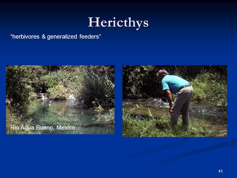 41 Hericthys Rio Aqua Bueno, Mexico herbivores & generalized feeders