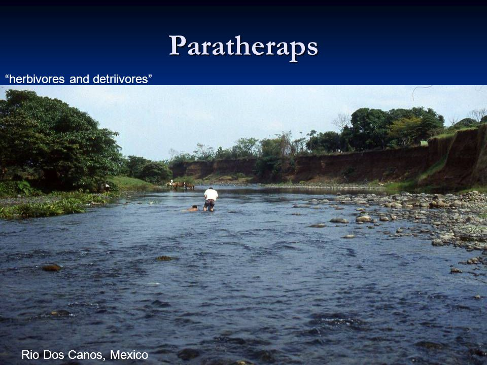 77 Paratheraps herbivores and detriivores Rio Dos Canos, Mexico
