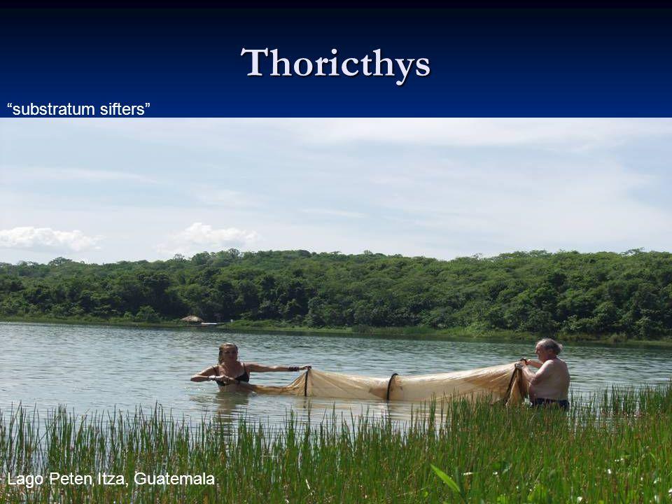 88 Thoricthys substratum sifters Lago Peten Itza, Guatemala