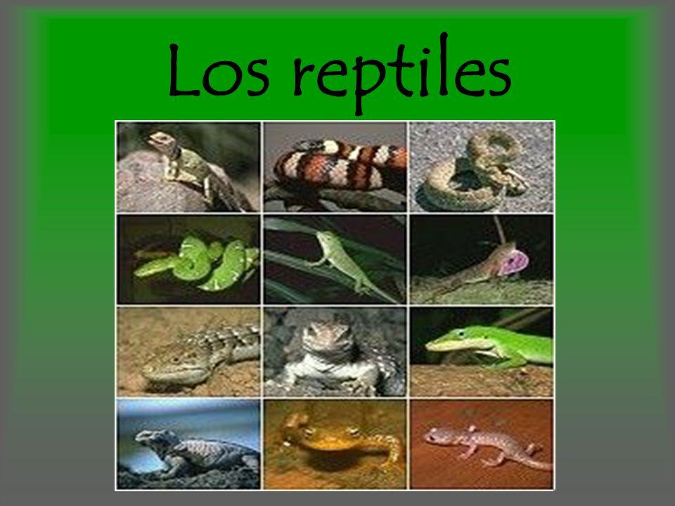 Pertenecen a la clase Reptilia y son animales vertebrados.