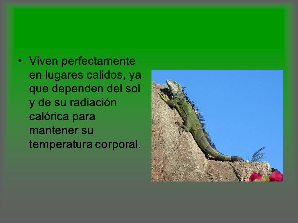 Viven perfectamente en lugares calidos, ya que dependen del sol y de su radiación calórica para mantener su temperatura corporal.