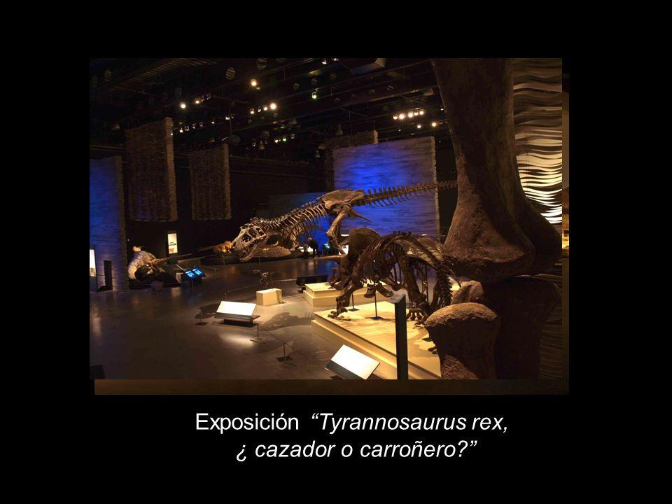Exposición Tyrannosaurus rex, ¿ cazador o carroñero