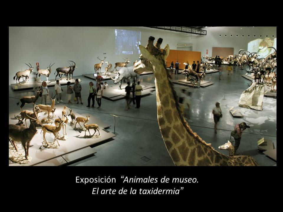 Exposición Animales de museo. El arte de la taxidermia