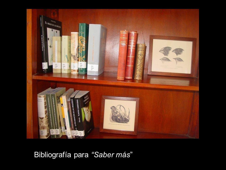 Bibliografía para Saber más
