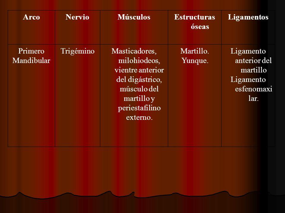 ArcoNervioMúsculosEstructuras óseas Ligamentos Primero Mandibular TrigéminoMasticadores, milohiodeos, vientre anterior del digástrico, músculo del mar