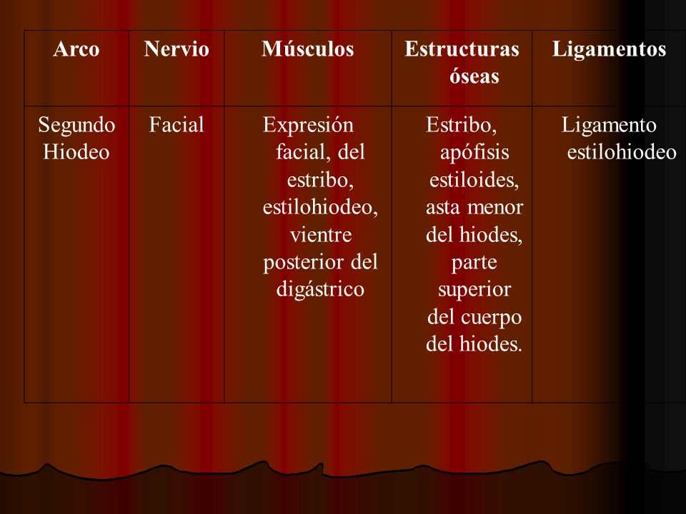 ArcoNervioMúsculosEstructuras óseas Ligamentos Segundo Hiodeo FacialExpresión facial, del estribo, estilohiodeo, vientre posterior del digástrico Estr