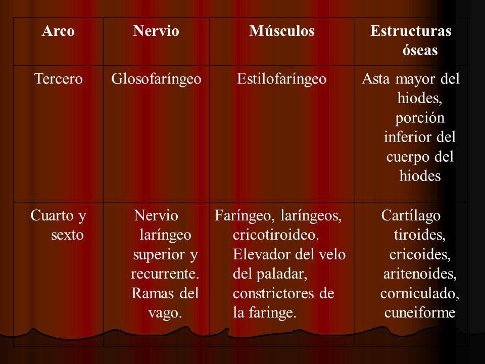 ArcoNervioMúsculosEstructuras óseas TerceroGlosofaríngeoEstilofaríngeoAsta mayor del hiodes, porción inferior del cuerpo del hiodes Cuarto y sexto Ner