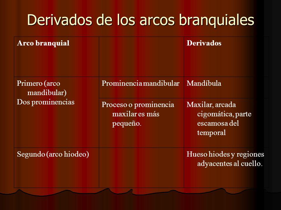 Derivados de los arcos branquiales Arco branquialDerivados Primero (arco mandibular) Dos prominencias Prominencia mandibularMandíbula Proceso o promin