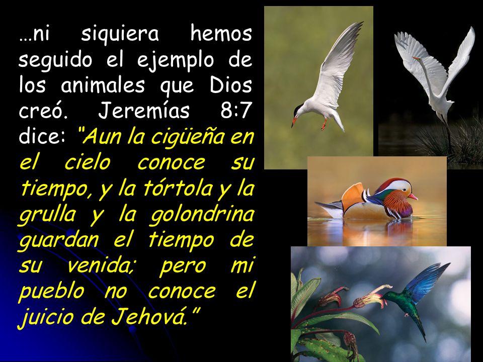 …ni siquiera hemos seguido el ejemplo de los animales que Dios creó. Jeremías 8:7 dice: Aun la cigüeña en el cielo conoce su tiempo, y la tórtola y la
