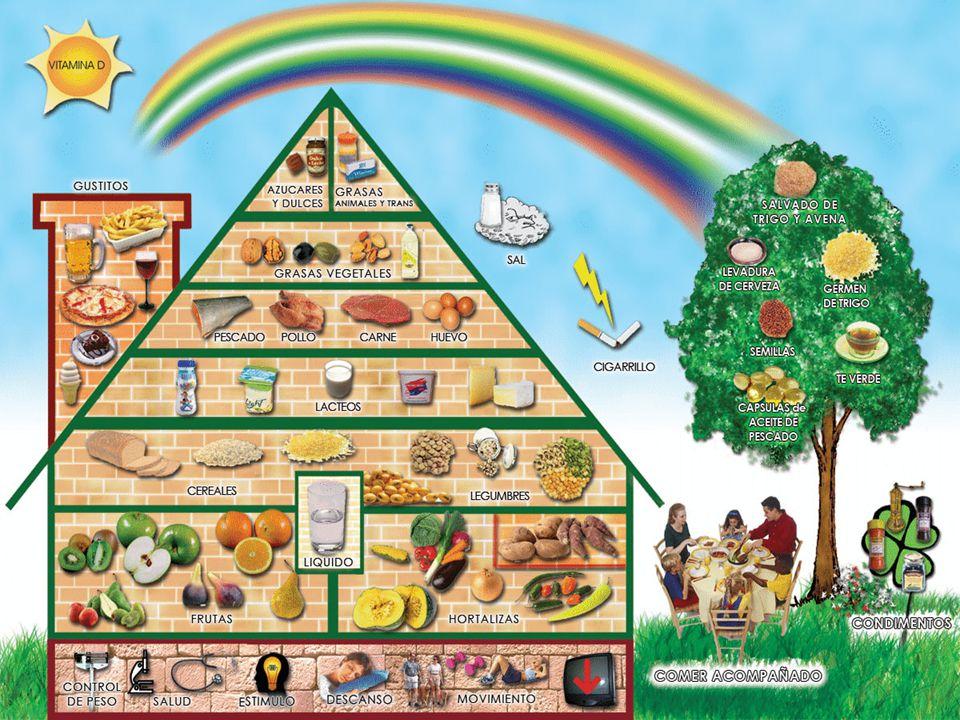 a nutrición es el proceso biológico en el que los organismos asimilan los alimentos y los líquidos necesarios para el funcionamiento, el crecimiento y el mantenimiento de sus funciones vitales.