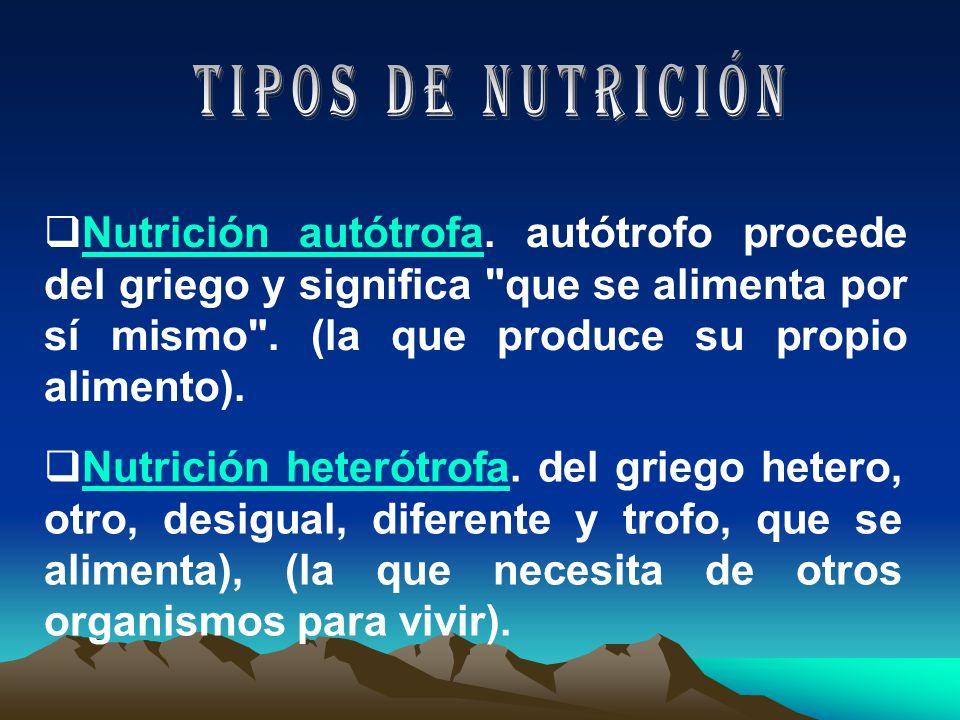 Nutrición autótrofa.autótrofo procede del griego y significa que se alimenta por sí mismo .