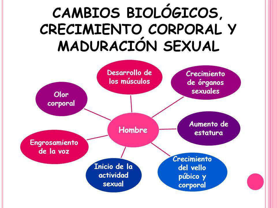 CAMBIOS BIOLÓGICOS, CRECIMIENTO CORPORAL Y MADURACIÓN SEXUAL Hombre Desarrollo de los músculos Crecimiento de órganos sexuales Aumento de estatura Cre