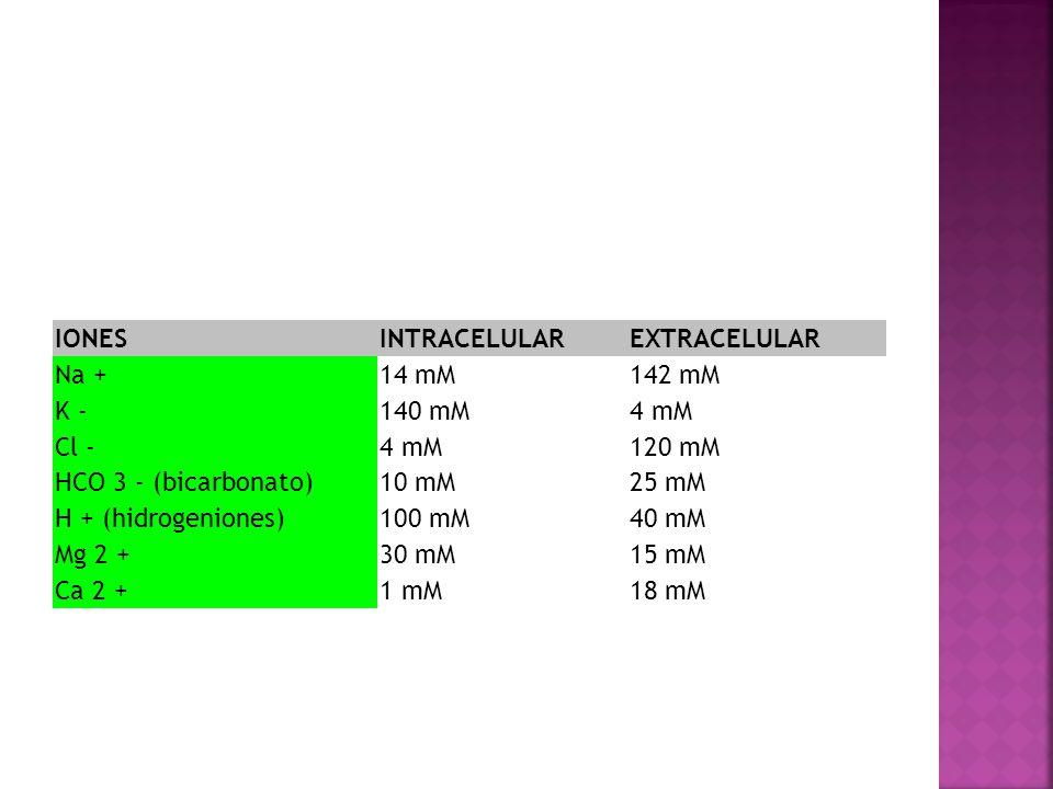 IONESINTRACELULAREXTRACELULAR Na +14 mM142 mM K -140 mM4 mM Cl -4 mM120 mM HCO 3 - (bicarbonato)10 mM25 mM H + (hidrogeniones)100 mM40 mM Mg 2 +30 mM1