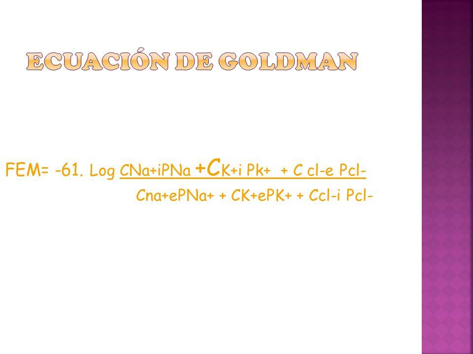 FEM= -61. Log CNa+iPNa +C K+i Pk+ + C cl-e Pcl- Cna+ePNa+ + CK+ePK+ + Ccl-i Pcl-