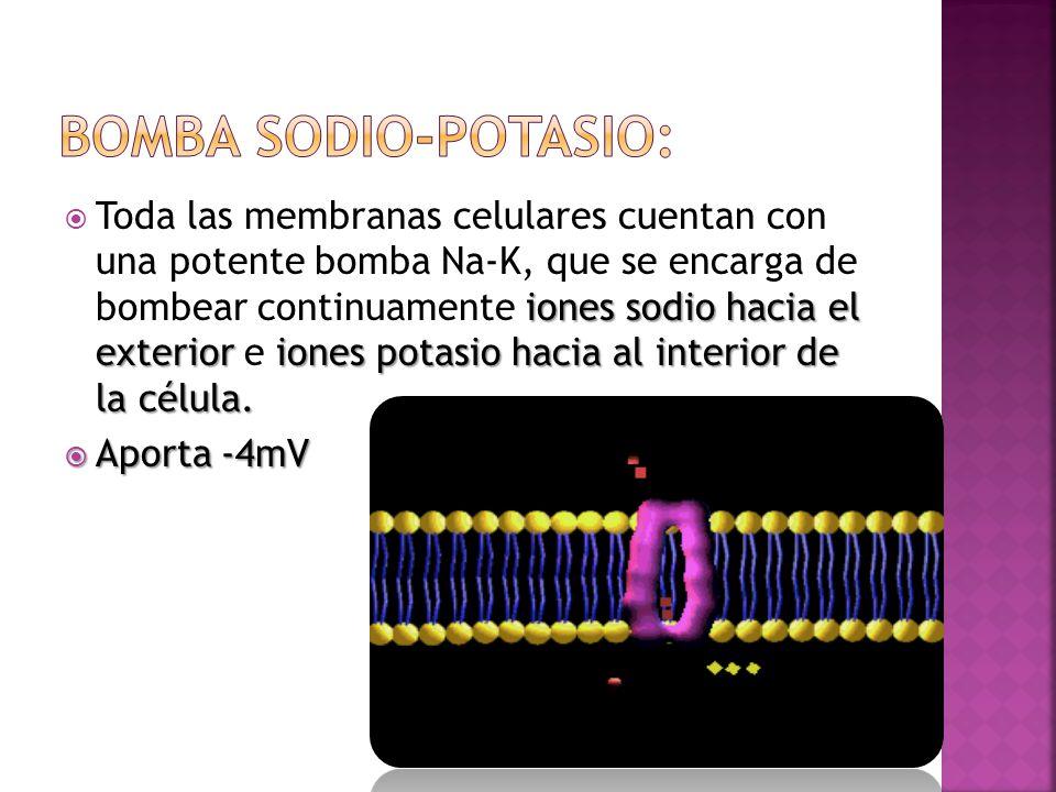 iones sodio hacia el exterioriones potasio hacia al interior de la célula. Toda las membranas celulares cuentan con una potente bomba Na-K, que se enc