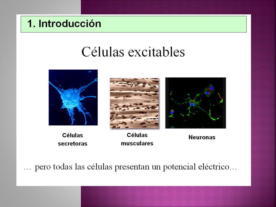Ion: Ion: partícula con carga eléctrica.