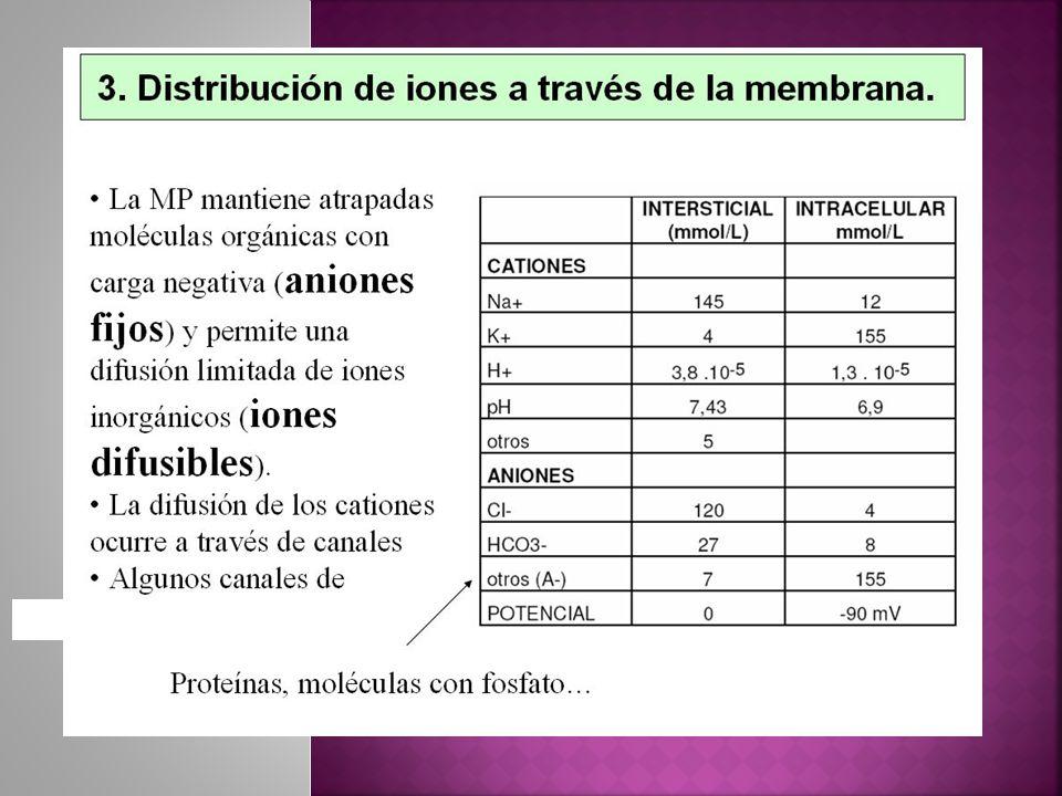 -90 mV, resultantes, convirtiéndose en el potencial de la membrana en reposo Potencial de Difusión de los Iones -86mV La Bomba de Sodio y potasio aporta -4mV