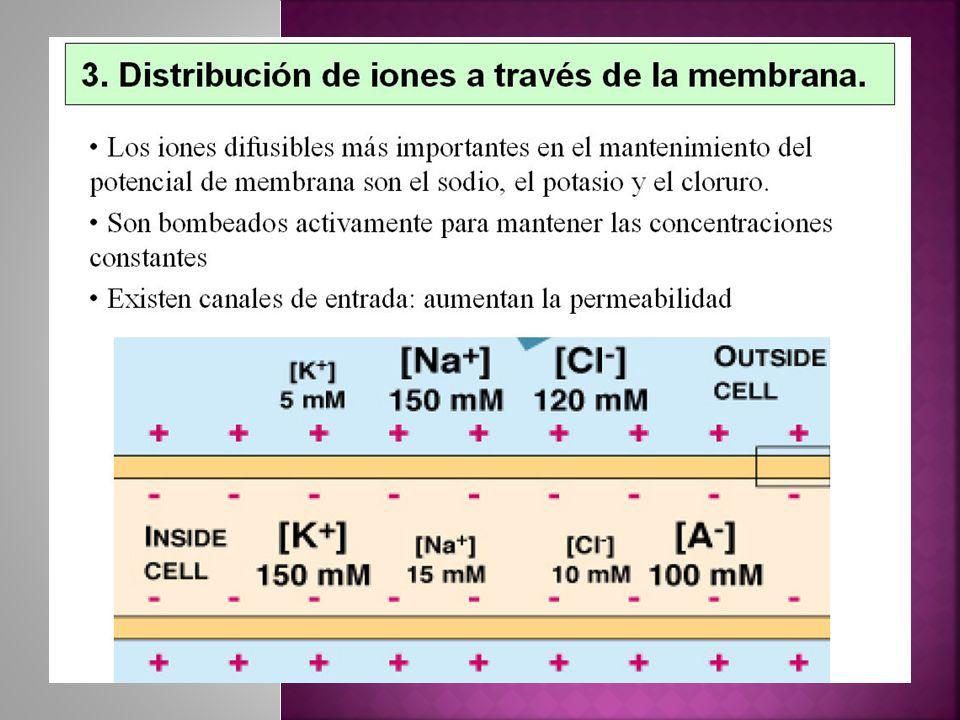 Potenciales en espigas Potenciales en meseta Potenciales rítmicos Tipos de potenciales de acción