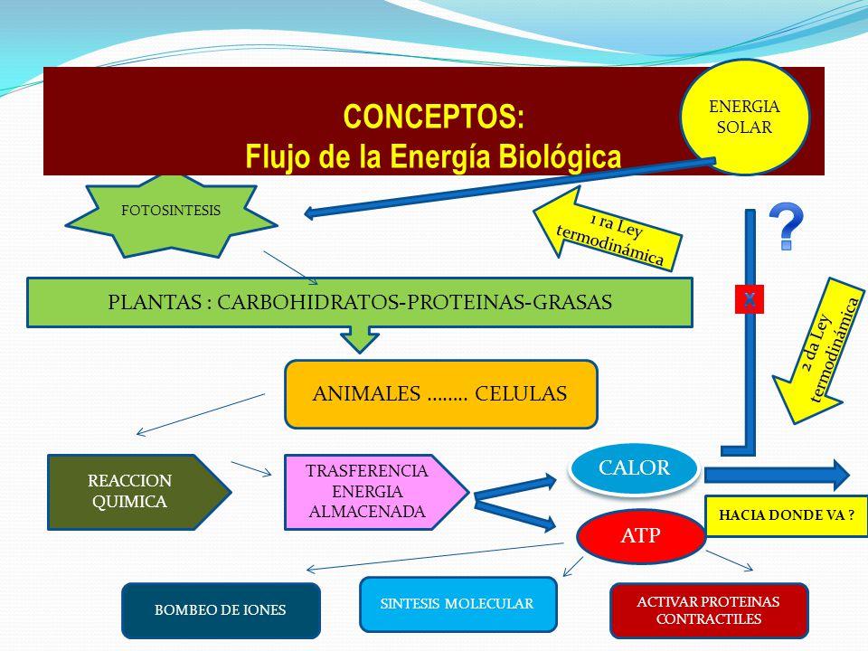 1 ra Ley termodinámica FOTOSINTESIS PLANTAS : CARBOHIDRATOS-PROTEINAS-GRASAS ANIMALES …….. CELULAS REACCION QUIMICA TRASFERENCIA ENERGIA ALMACENADA AT