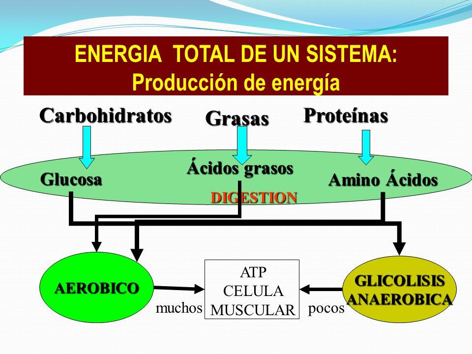 Carbohidratos Grasas Proteínas Glucosa Ácidos grasos Amino Ácidos DIGESTION ATP CELULA MUSCULAR AEROBICO GLICOLISISANAEROBICA muchospocos ENERGIA TOTA