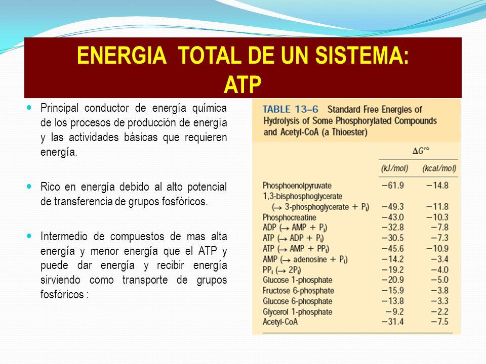 Principal conductor de energía química de los procesos de producción de energía y las actividades básicas que requieren energía. Rico en energía debid