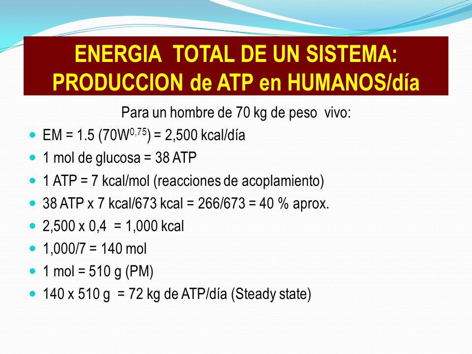 Para un hombre de 70 kg de peso vivo: EM = 1.5 (70W 0,75 ) = 2,500 kcal/día 1 mol de glucosa = 38 ATP 1 ATP = 7 kcal/mol (reacciones de acoplamiento)