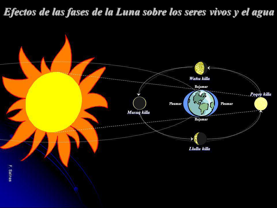 F. Salinas Musuq killa Poqoy killa Wañu killa Llullu killa Efectos de las fases de la Luna sobre los seres vivos y el agua Pleamar Bajamar