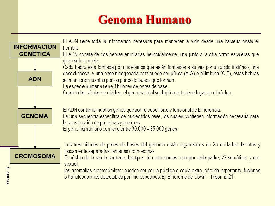 Genoma Humano INFORMACIÓN GENÉTICA ADN GENOMA CROMOSOMA El ADN tiene toda la información necesaria para mantener la vida desde una bacteria hasta el h