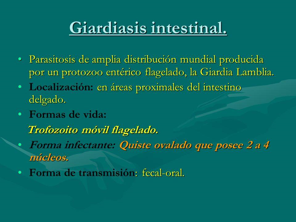 Giardiasis intestinal. Parasitosis de amplia distribución mundial producida por un protozoo entérico flagelado, la Giardia Lamblia.Parasitosis de ampl
