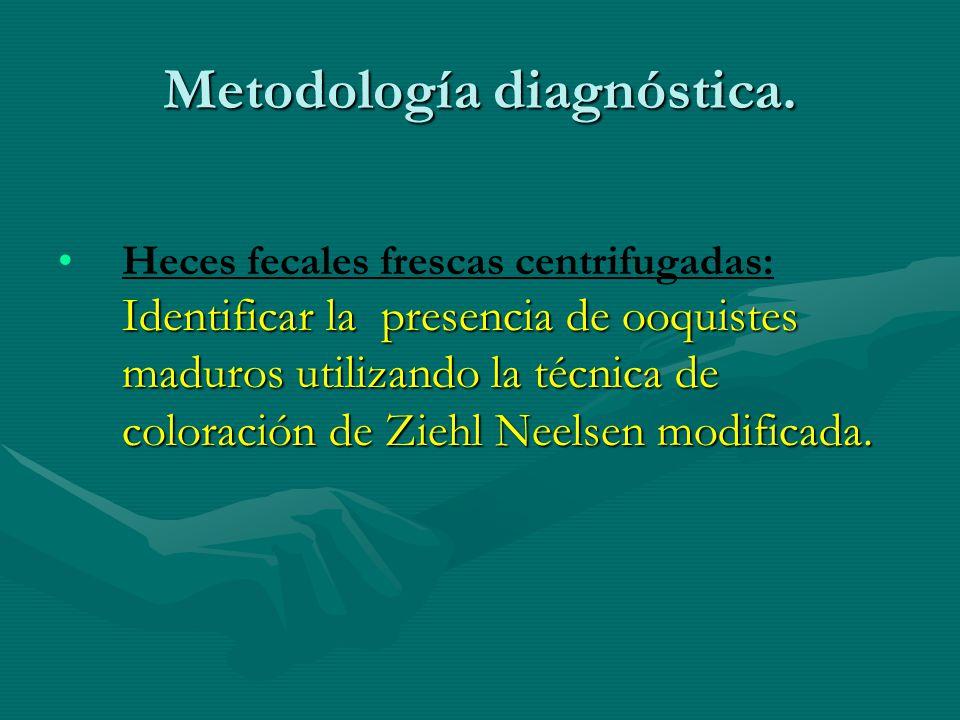 Metodología diagnóstica. Identificar la presencia de ooquistes maduros utilizando la técnica de coloración de Ziehl Neelsen modificada.Heces fecales f